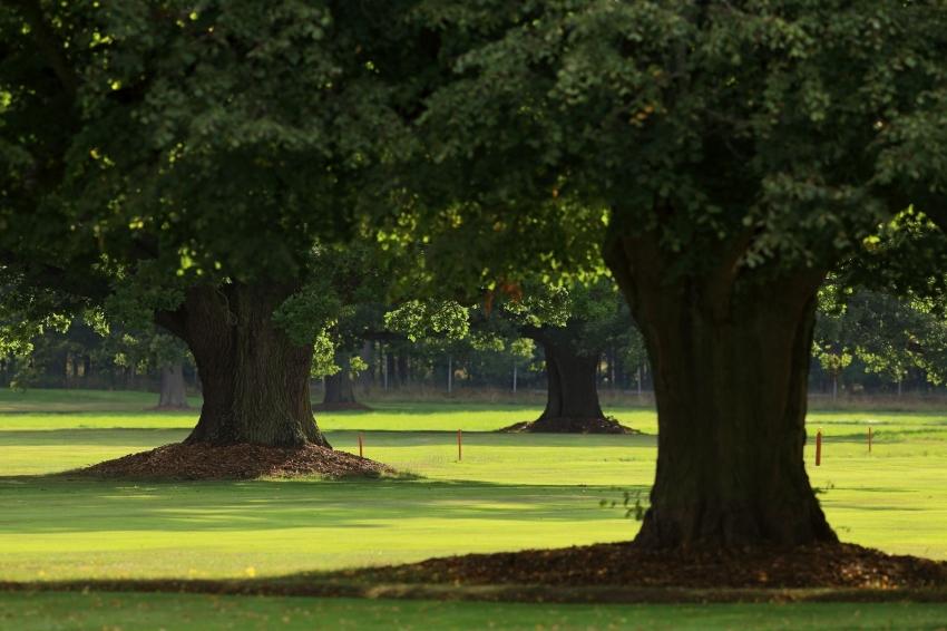 Rezervace golfové hry
