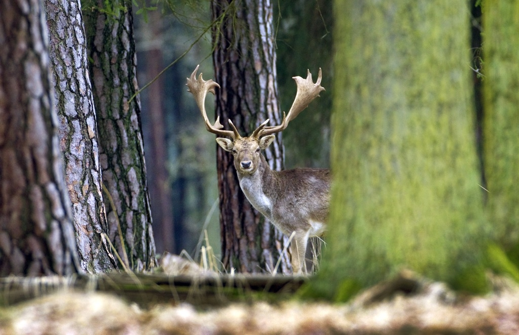 Myslivost a lesnictví